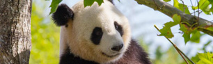 Algorithmes Google : Panda, Vitesse, Fraicheur...