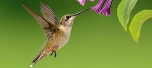 Algorithme Google Hummingbird (Colibri)